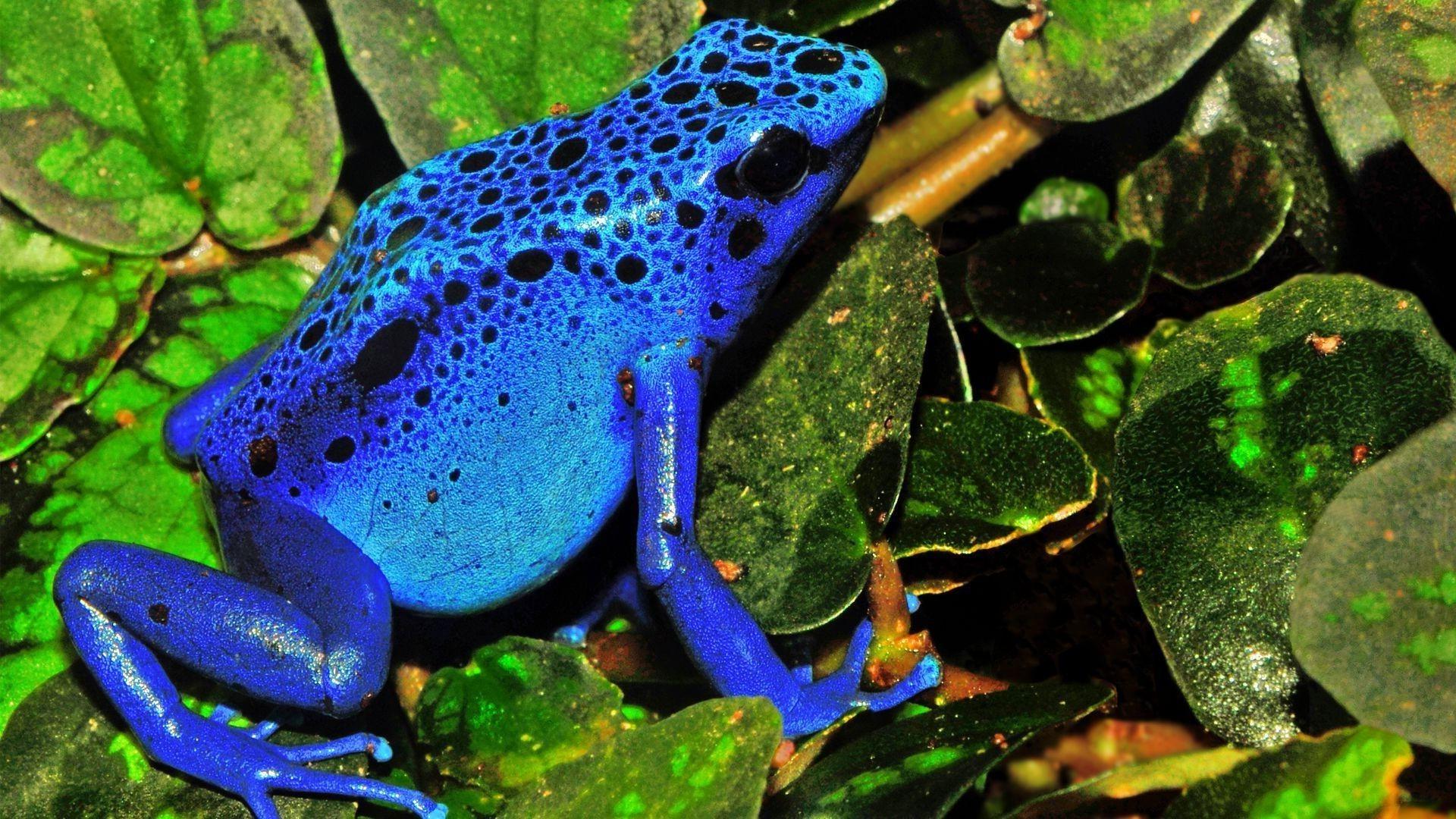 картинки голубых лягушек пашет, идиотство