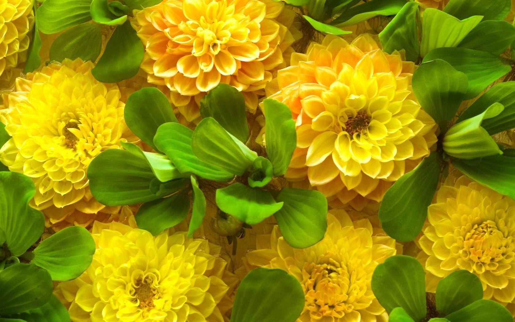 Весна, картинки фото цветы