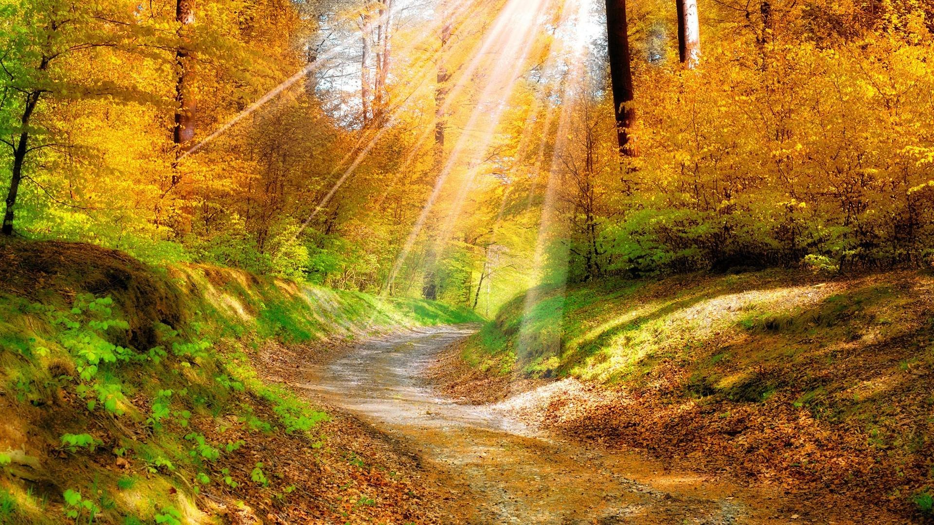 Парк осень солнце загрузить