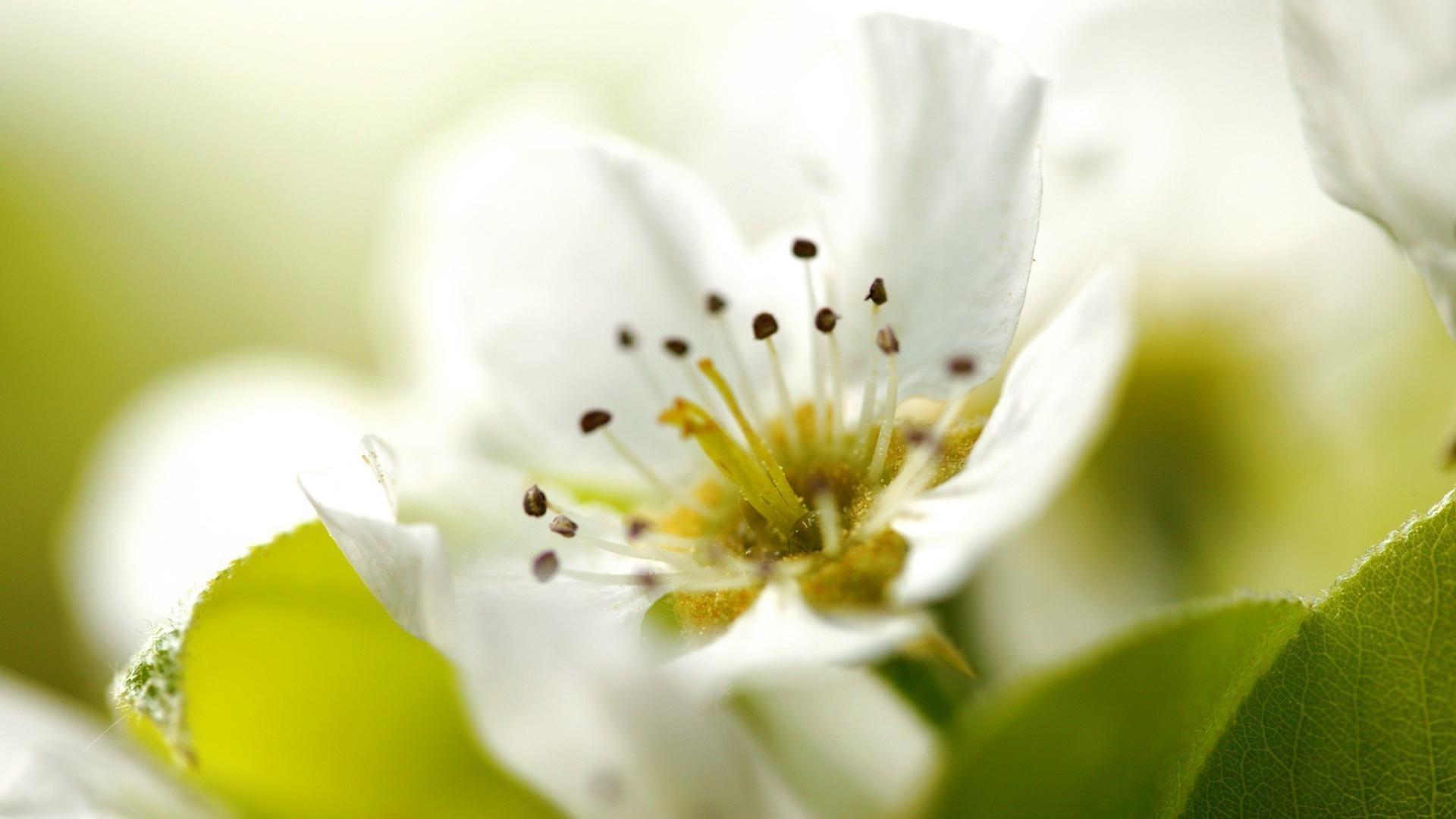 белые цветы на зеленом фоне фото высокого разрешения индустрия