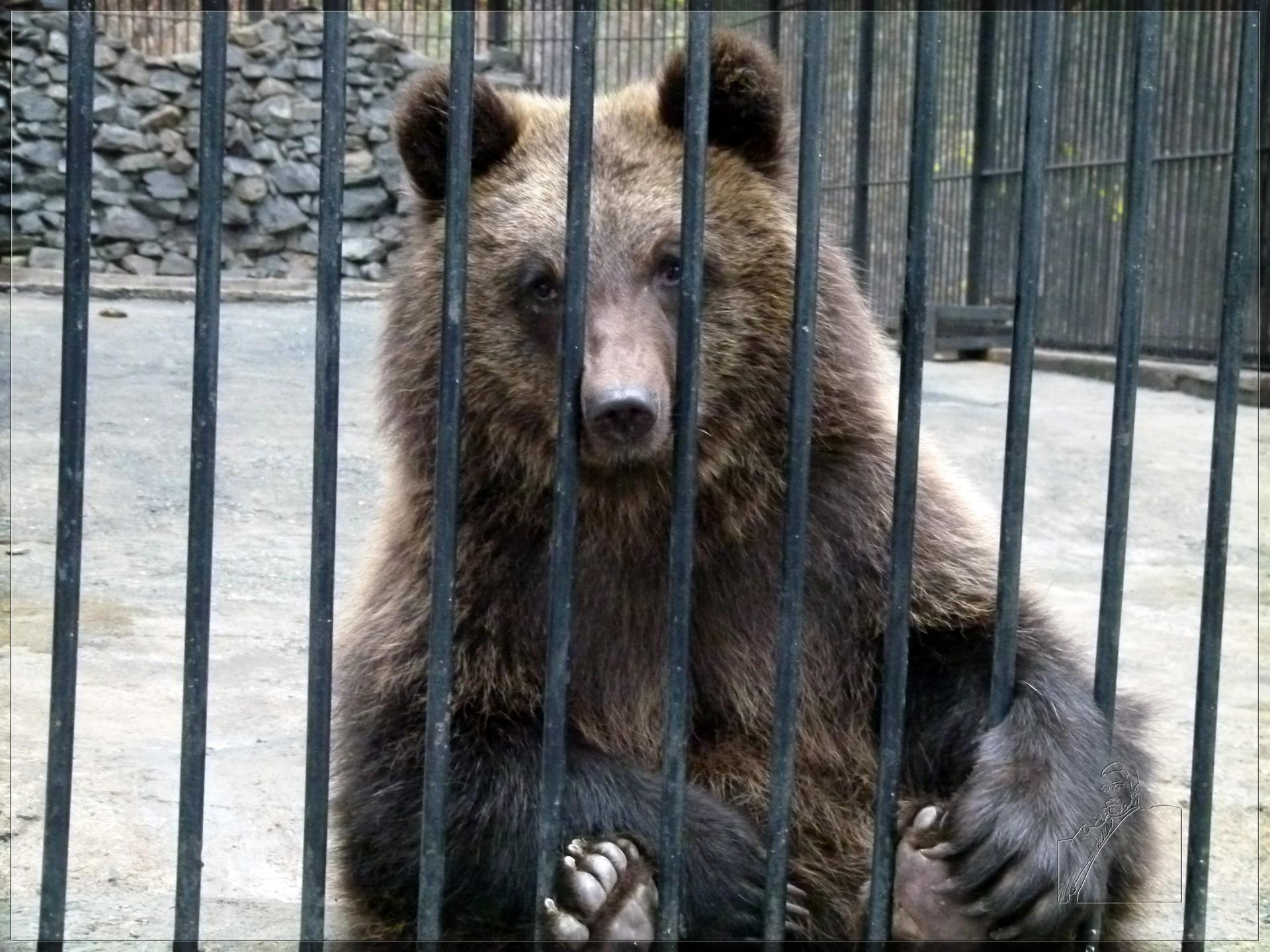 Медведь покалечил дрессировщицу в зоопарке Уссурийска
