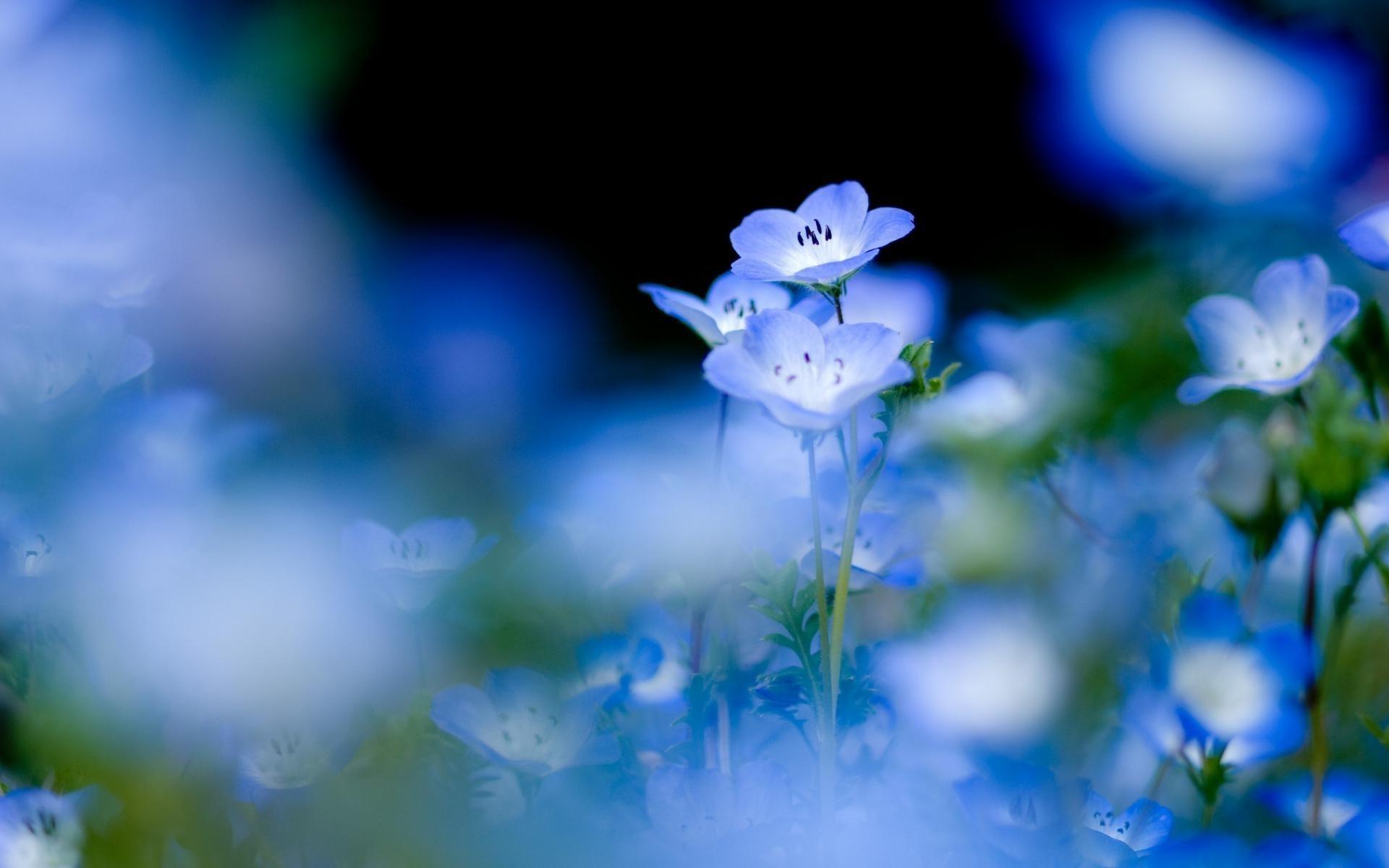 Красивые картинки на рабочий стол нежные цветы