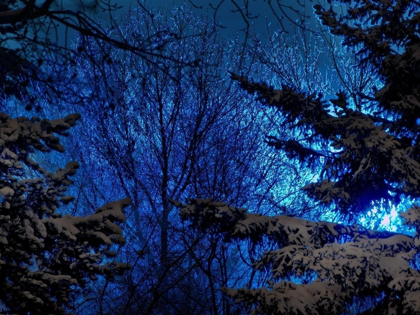 поговорим ночной лес картинки на рабочий случается, что его