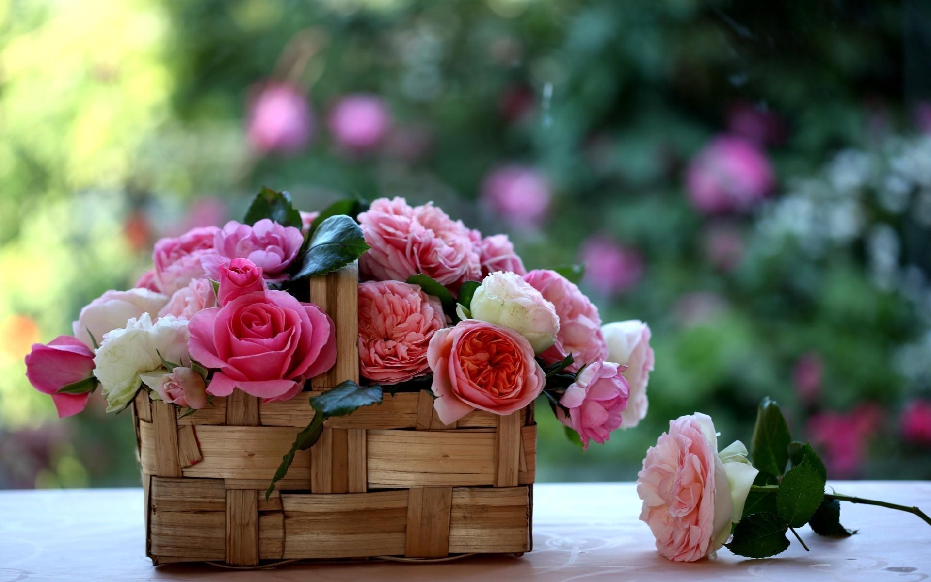 розовые цветы букет природа бесплатно