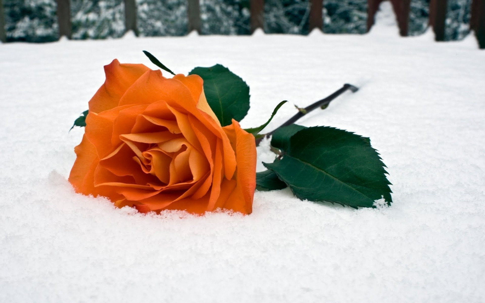 Доставка цветов, букет цветов на снегу в темноте
