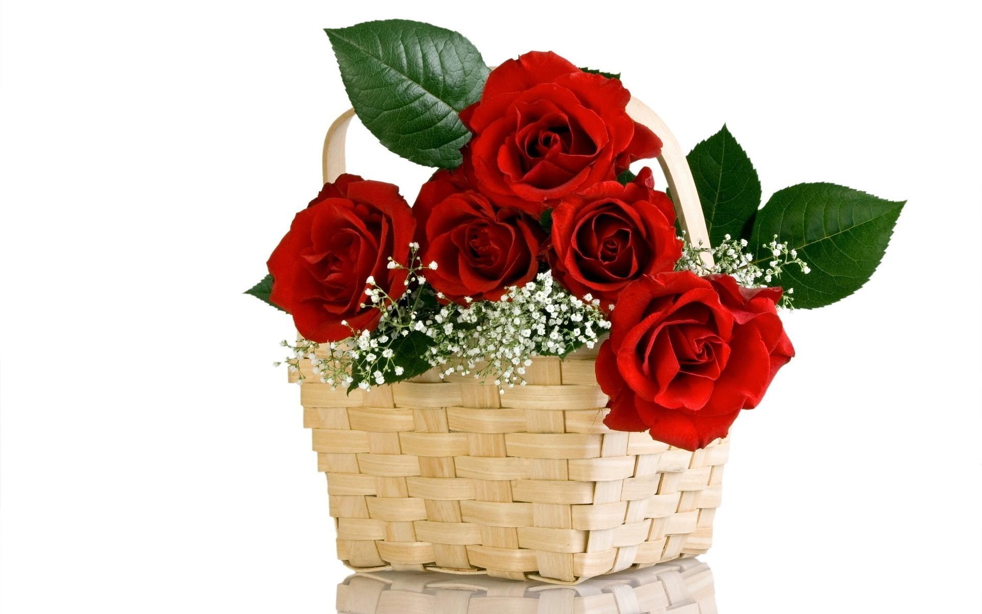 Технике, открытки с днем рождения розы на белом фоне