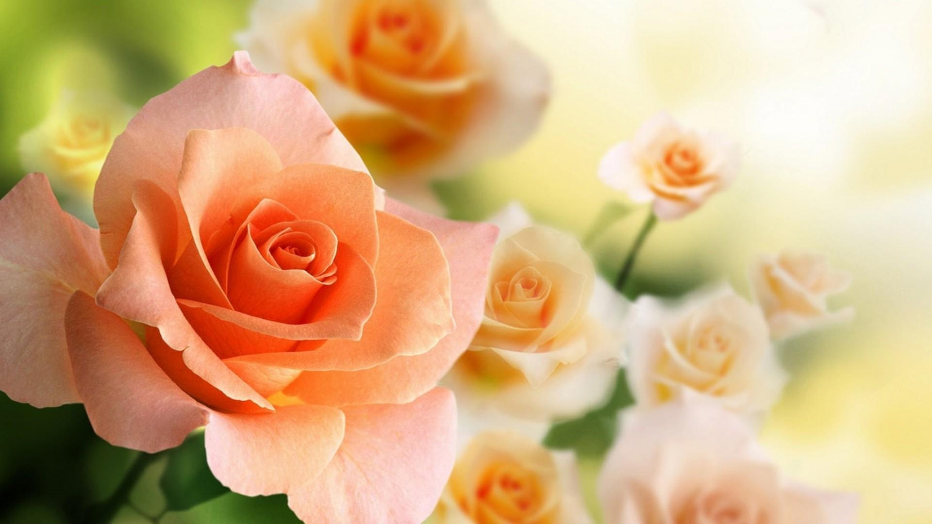 обои на рабочий стол букет роз широкоформатные стоит венчание