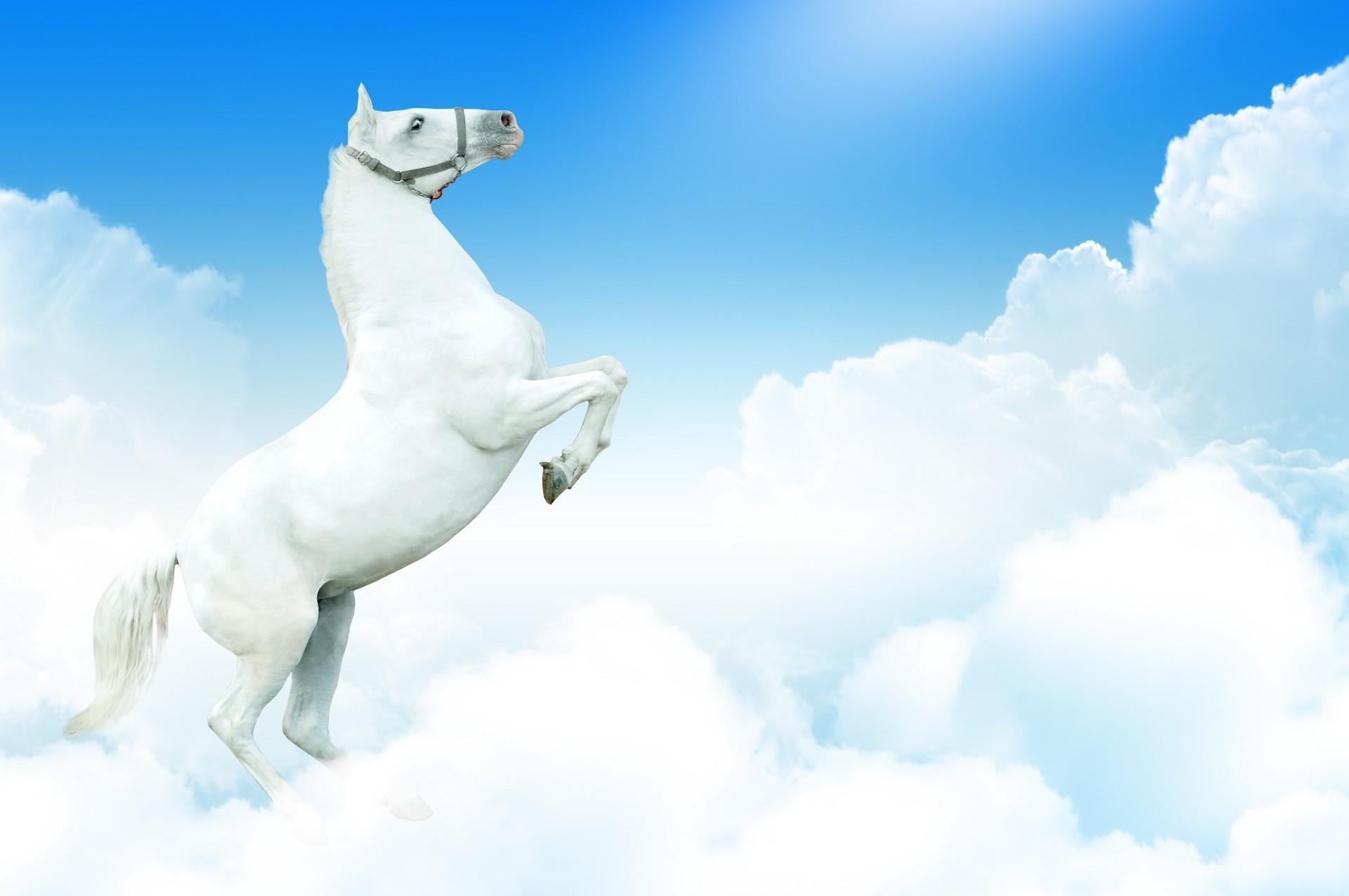 3д лошади обои для рабочего стола № 564041  скачать