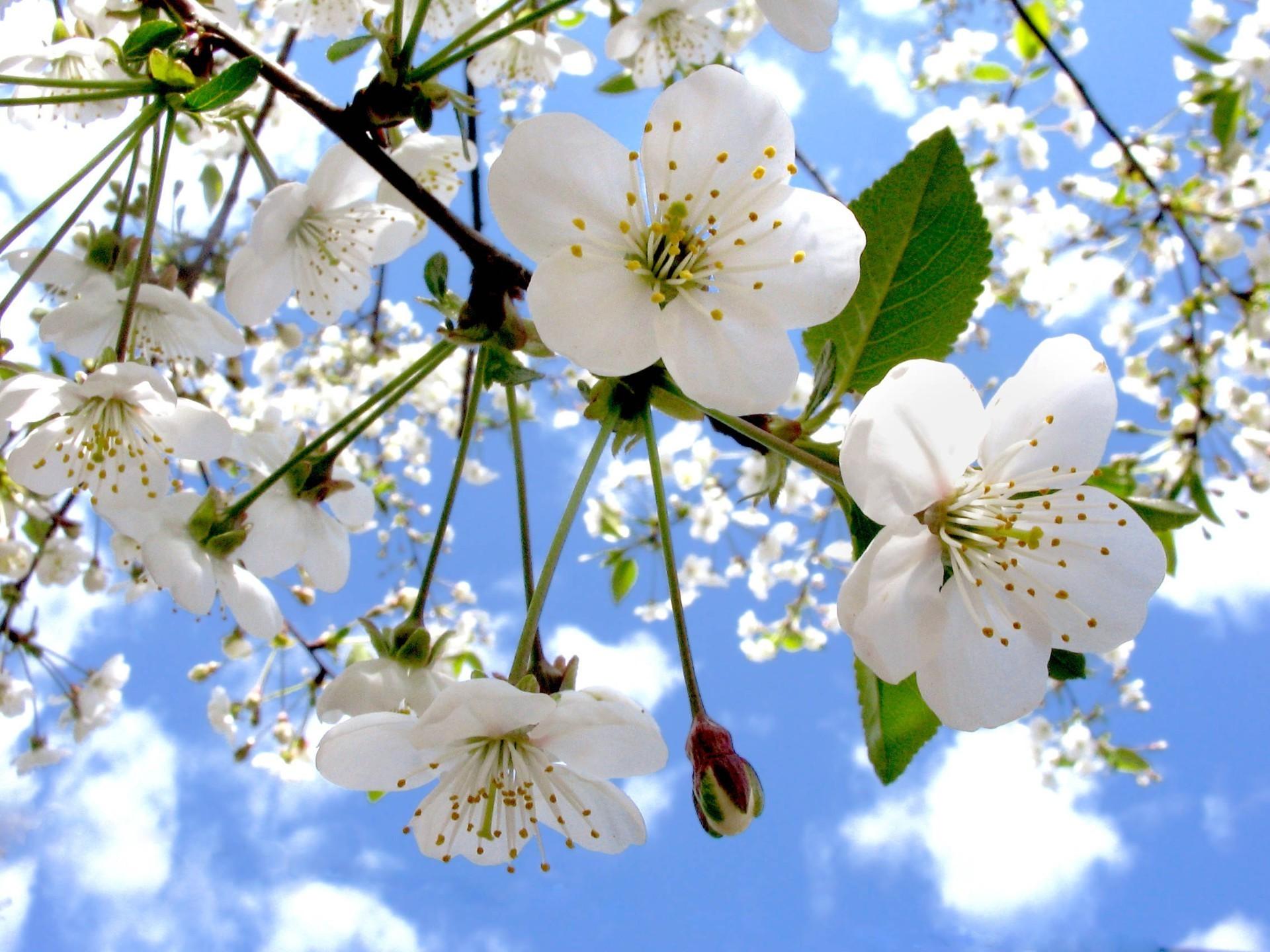 Открытки с цветущей яблоней весной, надписью абонента больше