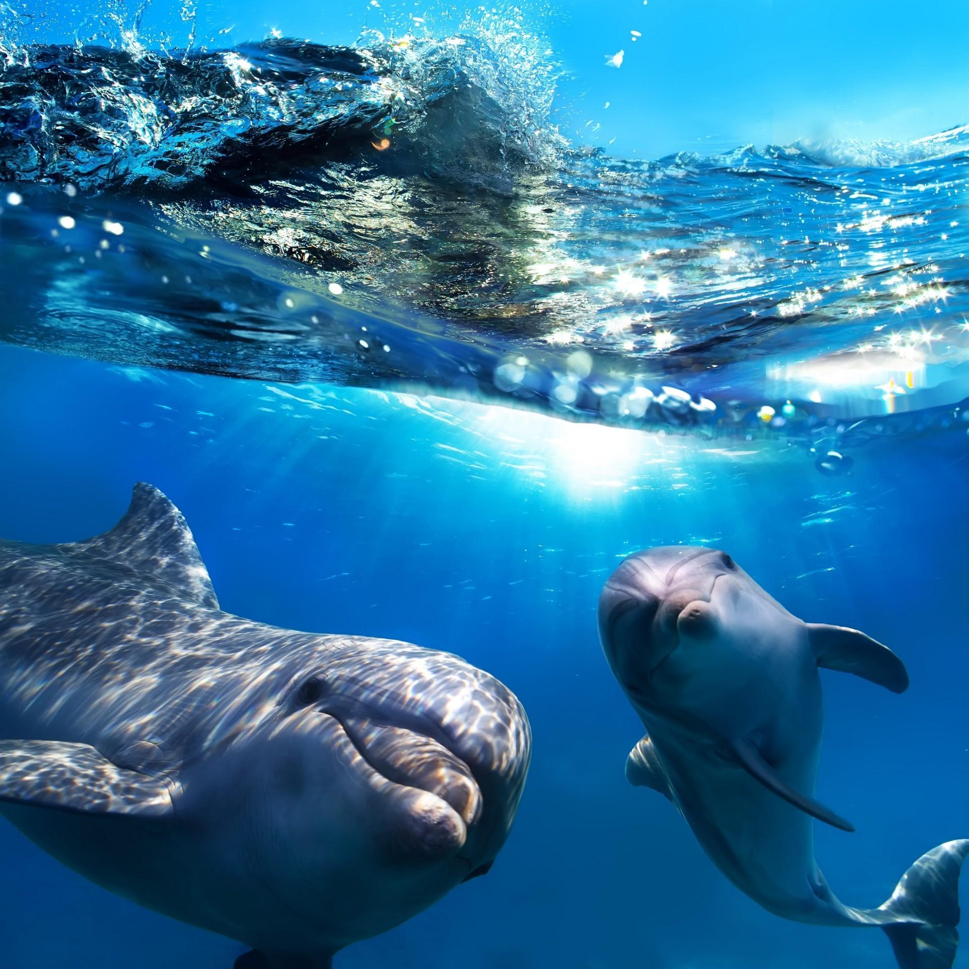 немецкие смотреть все картинки с дельфинами телеканале стб