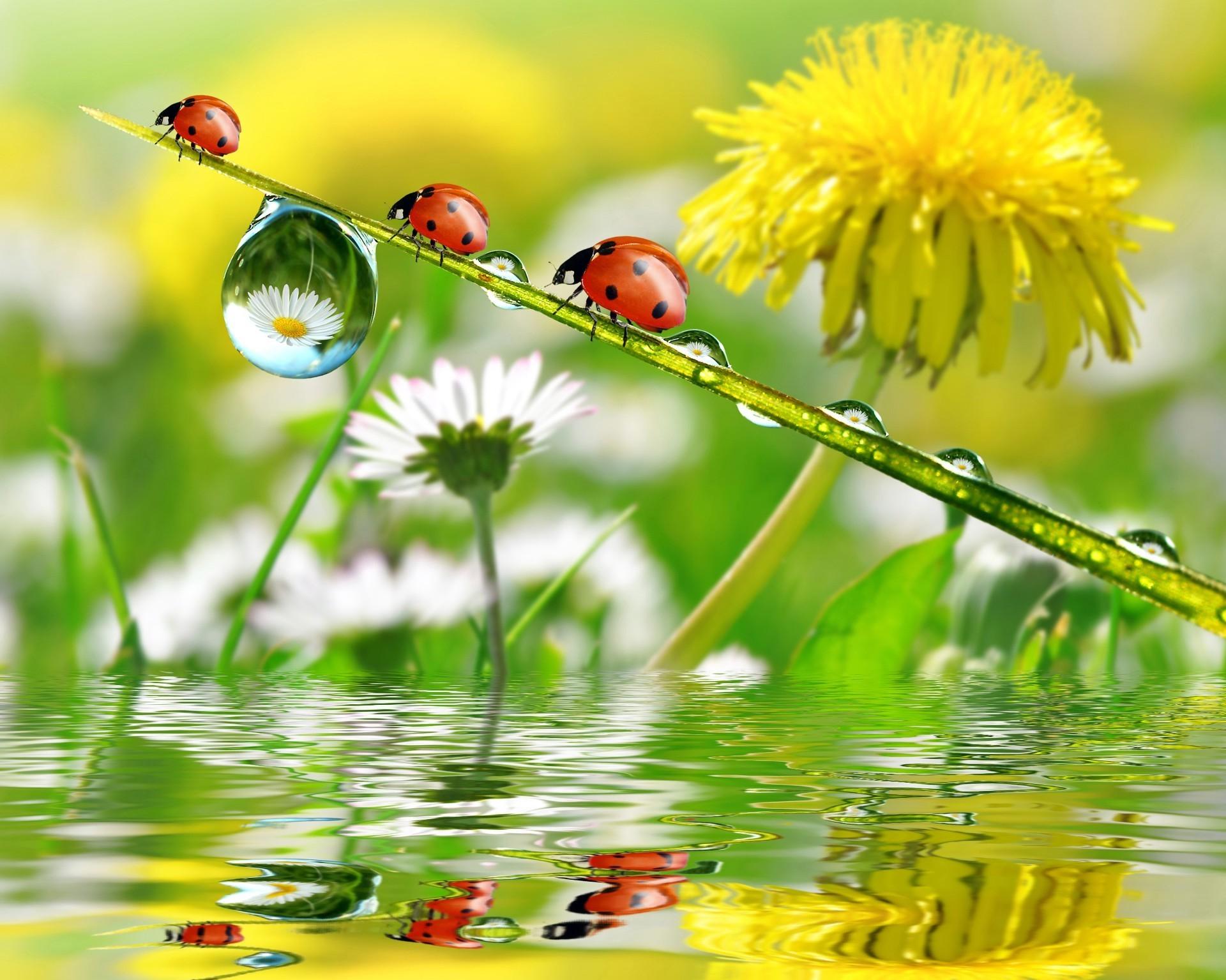 третье открытки с летним добрым утром с природой там основном показаны