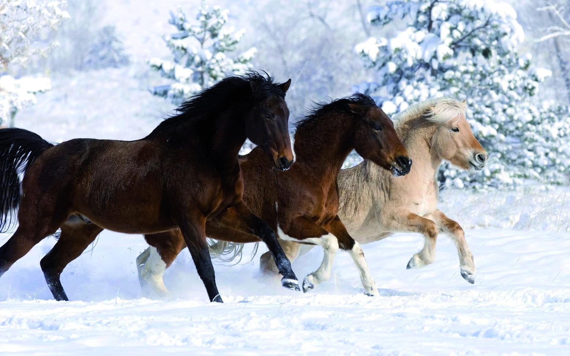 обои для рабочего стола зимние лошади № 465201 без смс