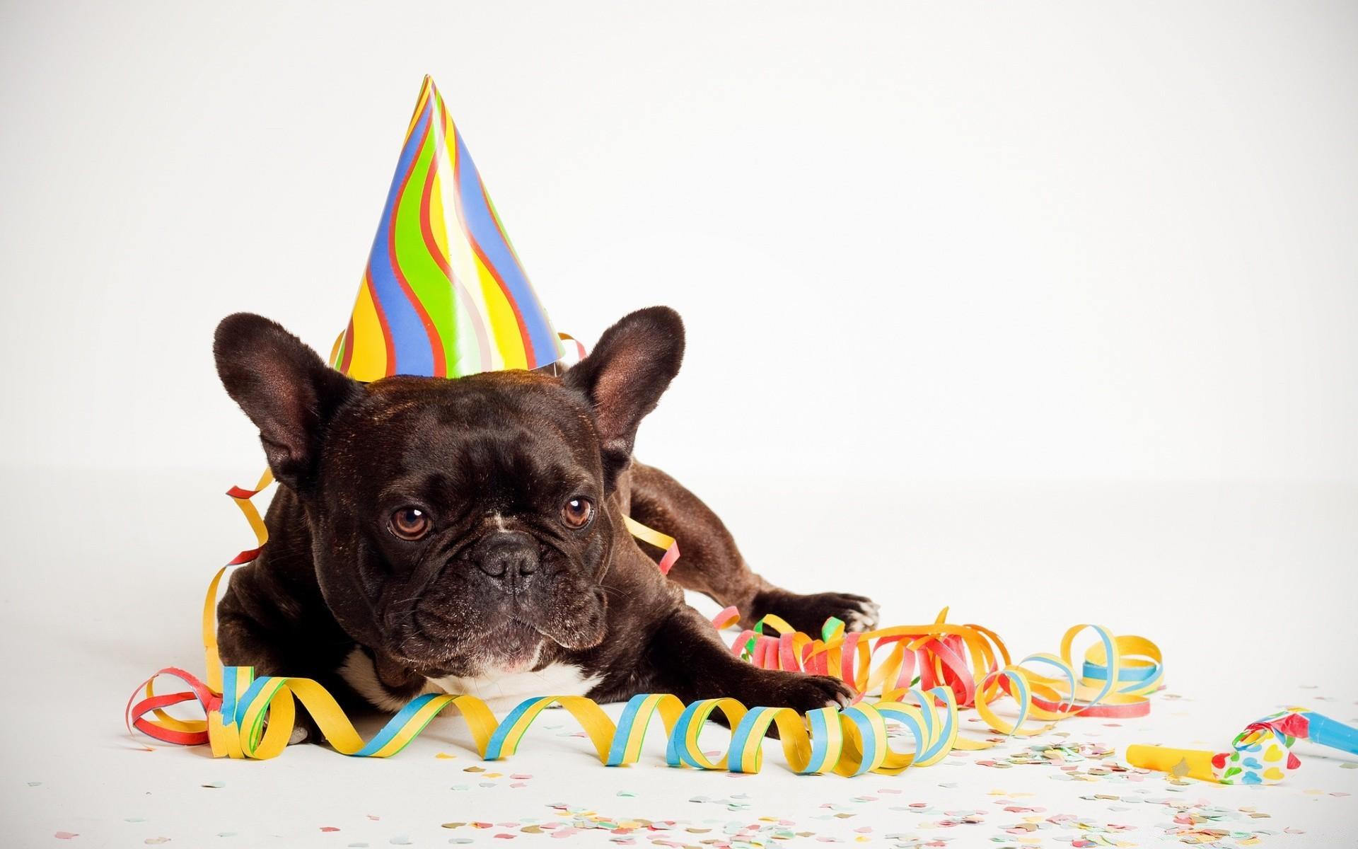 Поздравить домашнее животное с днем рождения