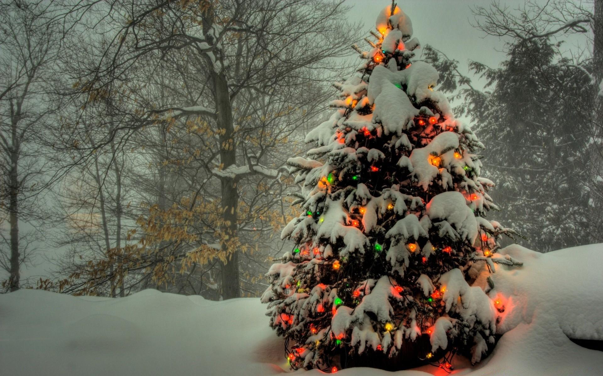 Интересные рецепты с фото для праздничного стола михайлович