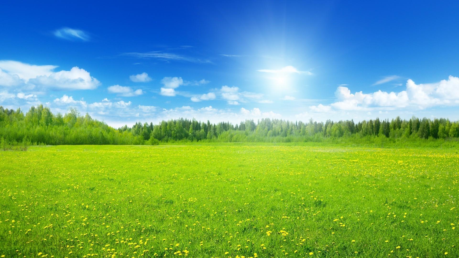 солнце лужайка березы  № 2741915  скачать