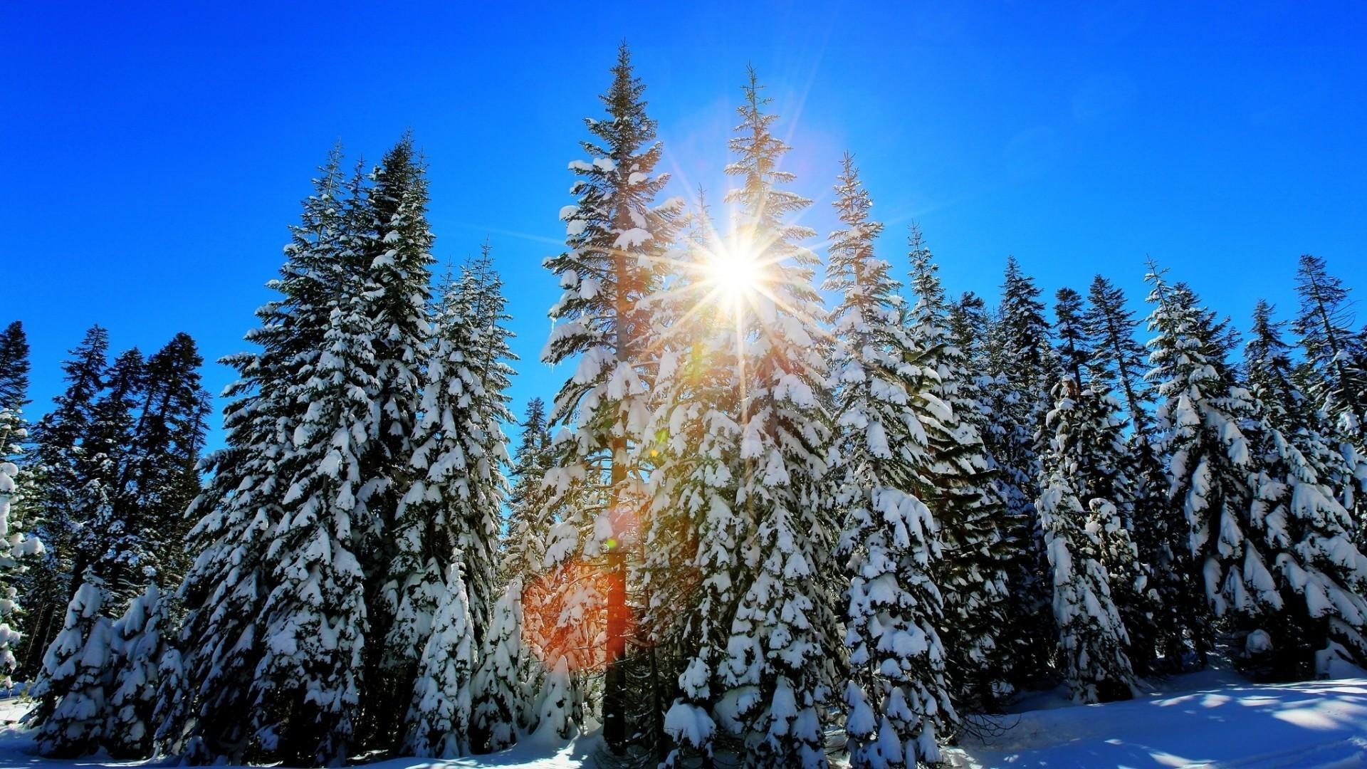 мелких картинки на рабочий стол зимний лес солнце на весь экран обезьяна символ наступающего