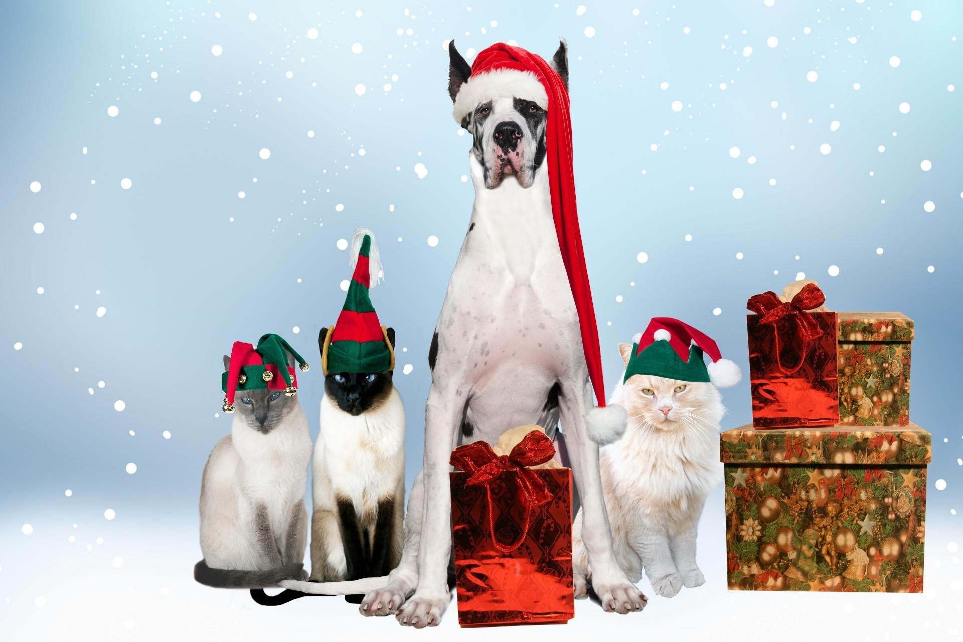 Про открытку, смешные картинки на новый год собаки 2018