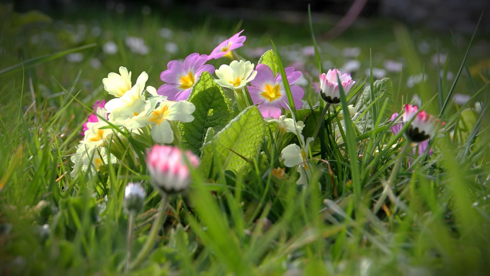 Полевые цветы скачать обои на