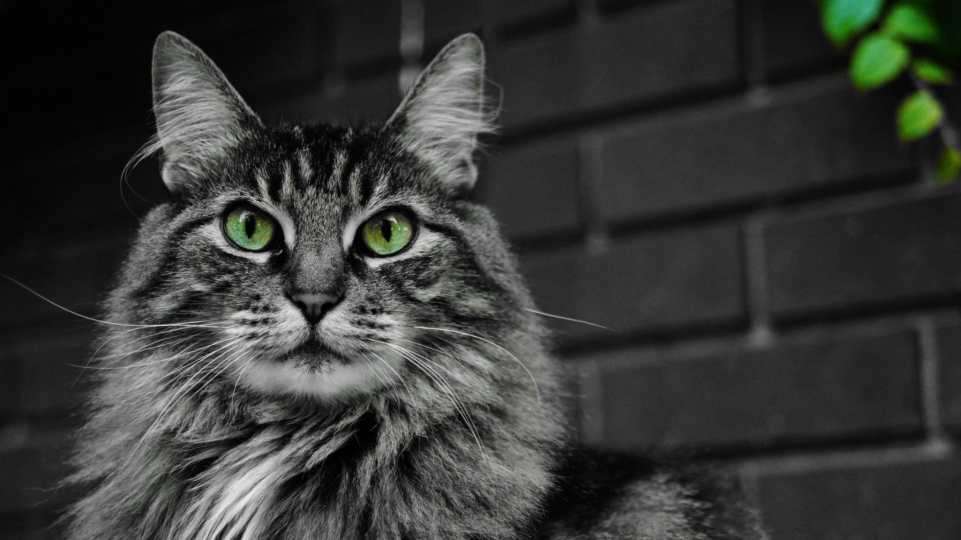 хитрый котенок в хорошем качестве