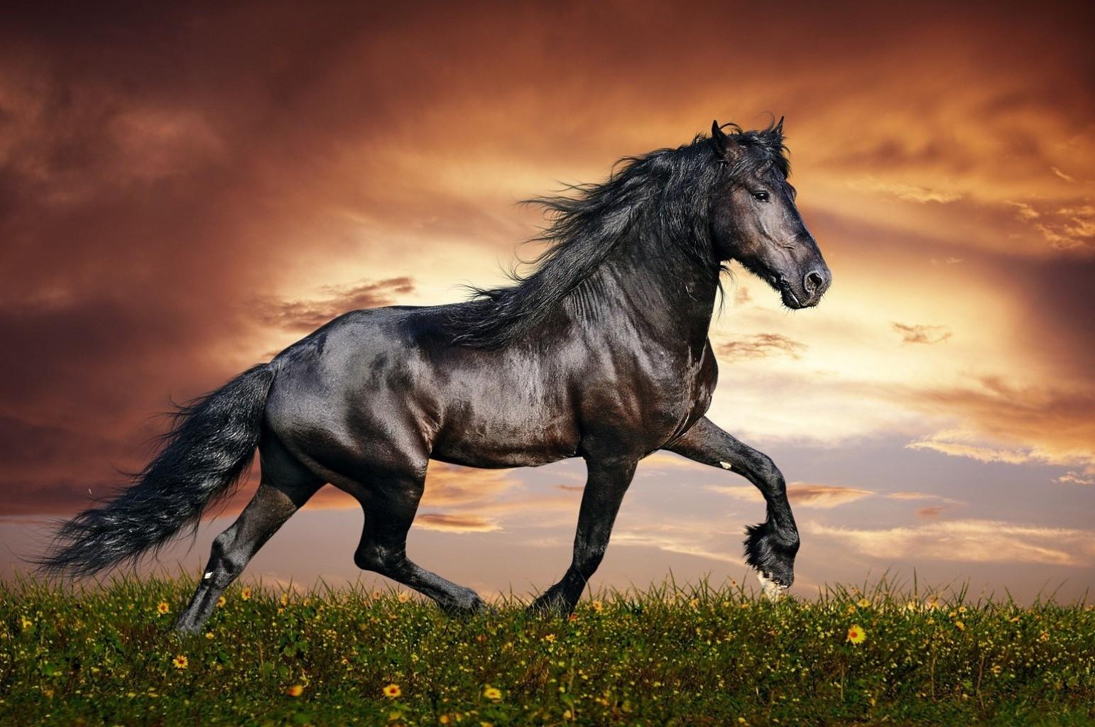 арабская лошадь обои на рабочий стол № 541956  скачать