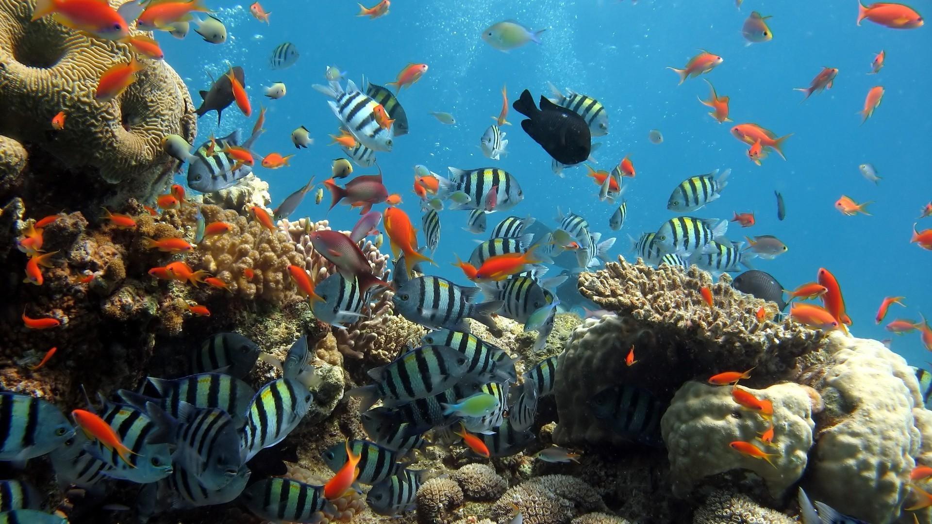 Подводный мир скачать обои на
