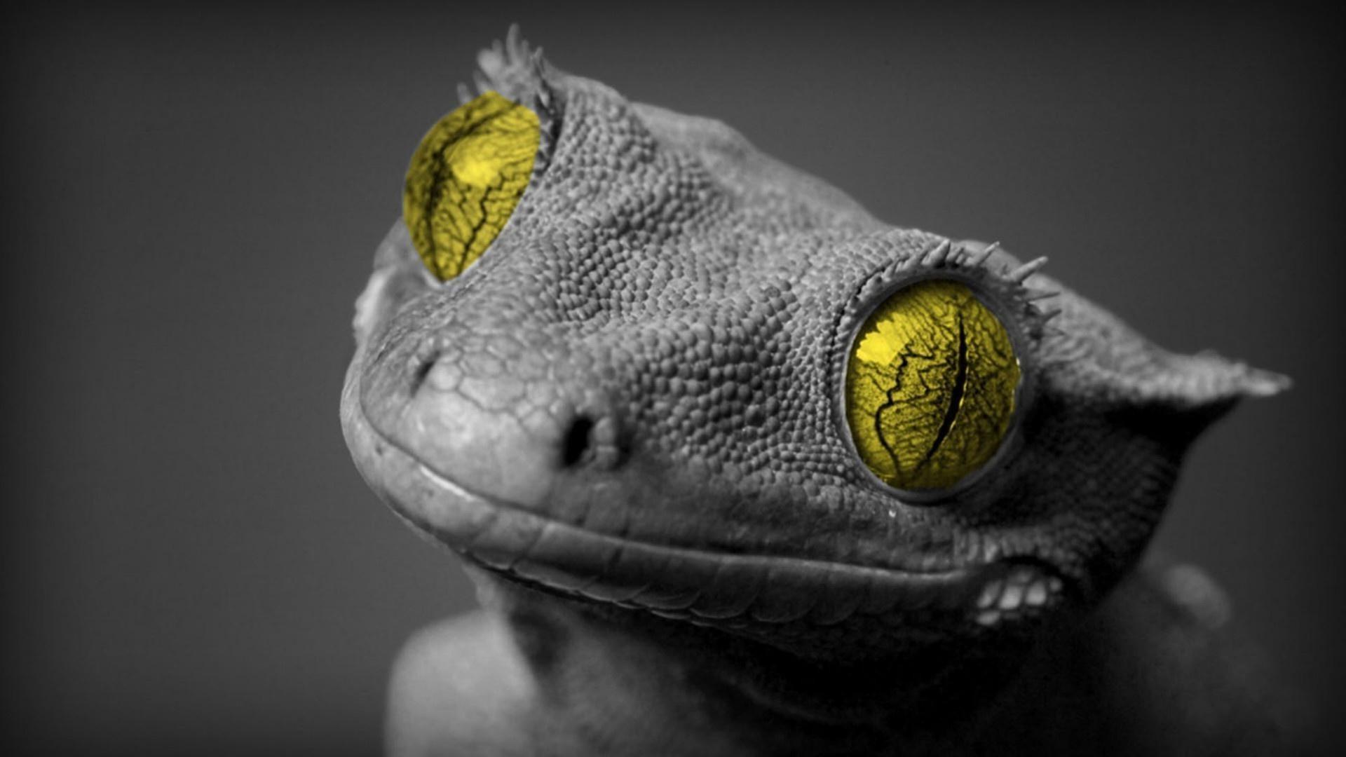 рептилии и лягушки гадина ящерица портрет животное пэт дракон дикой природы природа глаз цвет гекко один просмотр