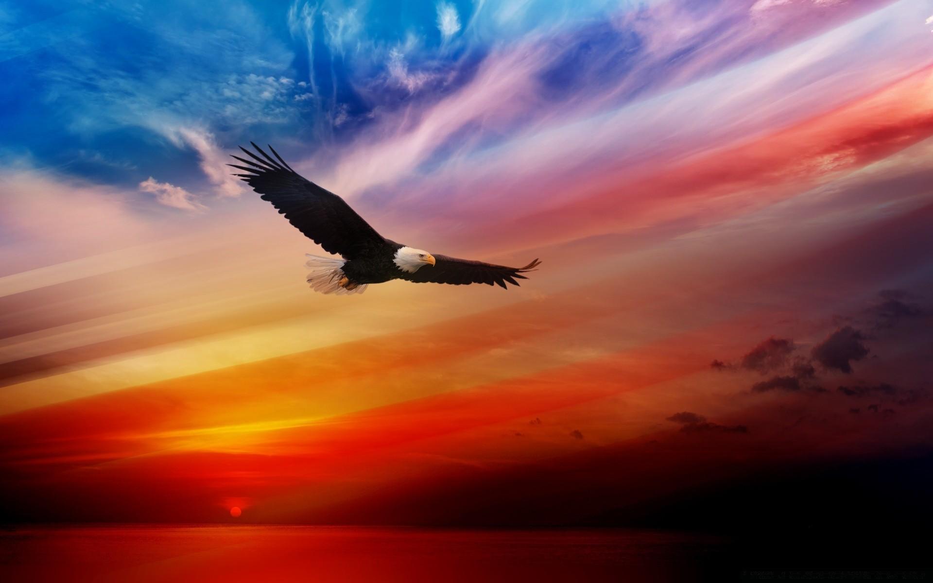 Орел в небе открытка, летием совместной