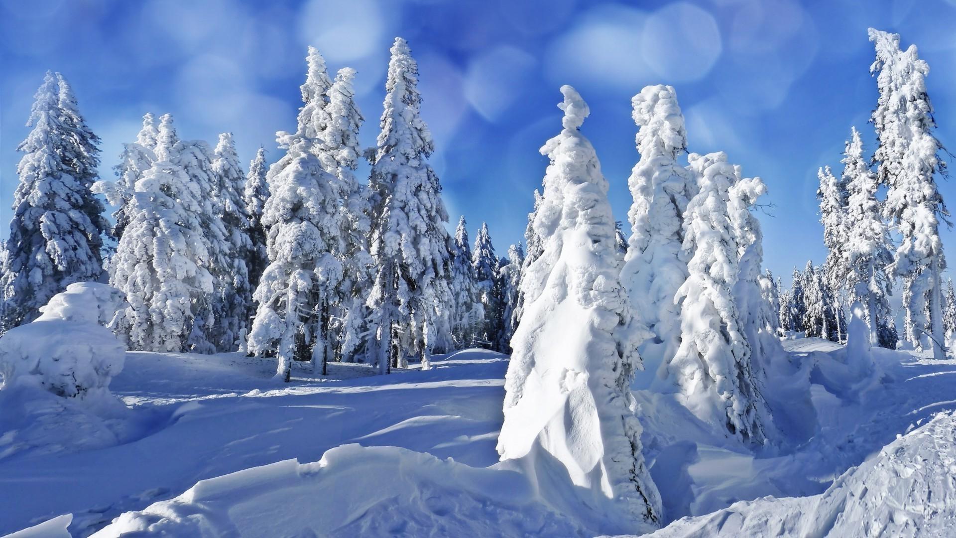 фотообои на рабочий стол широкоформатные зима мелирование один