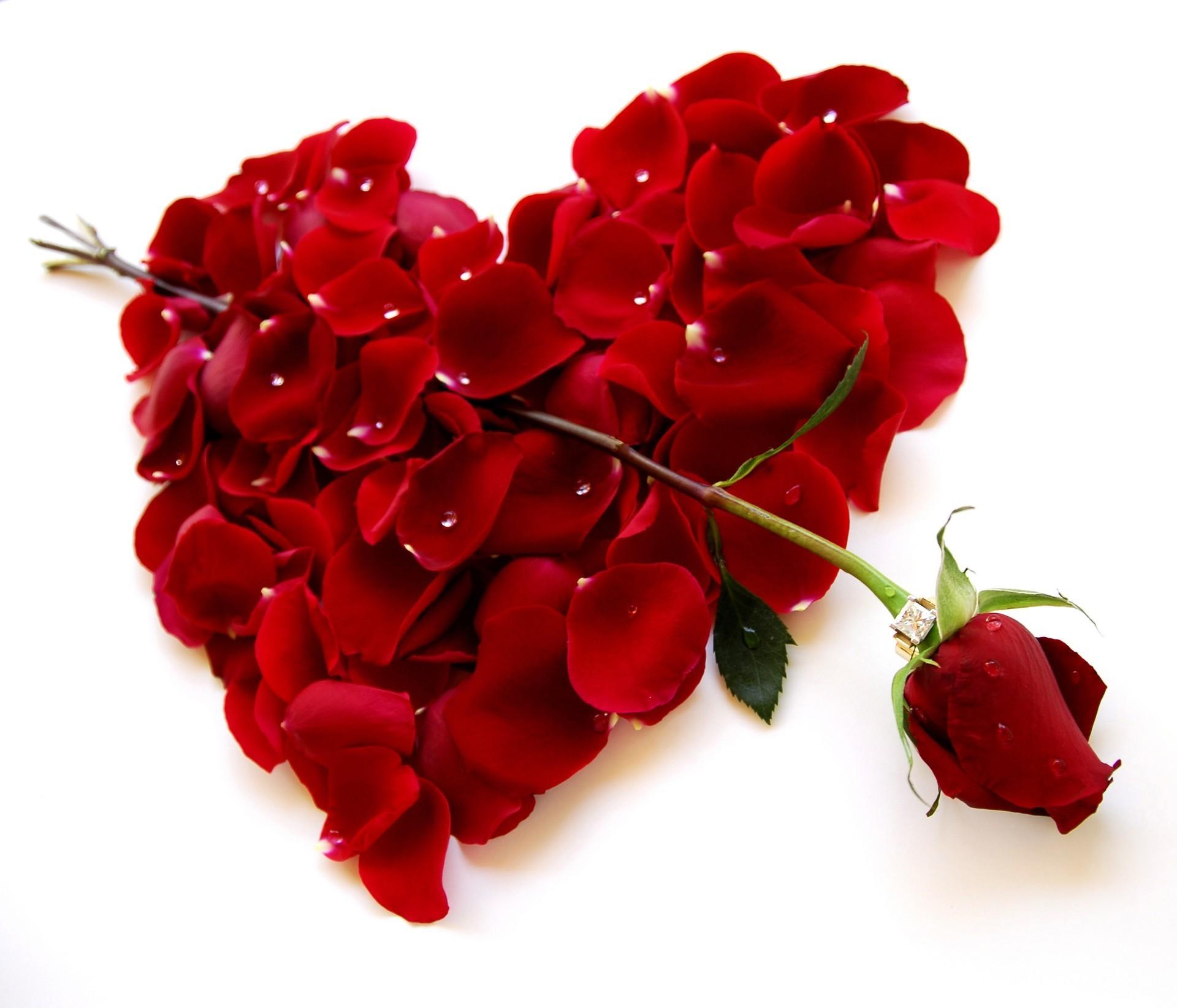 Цветы картинки для любимой девушки с надписями