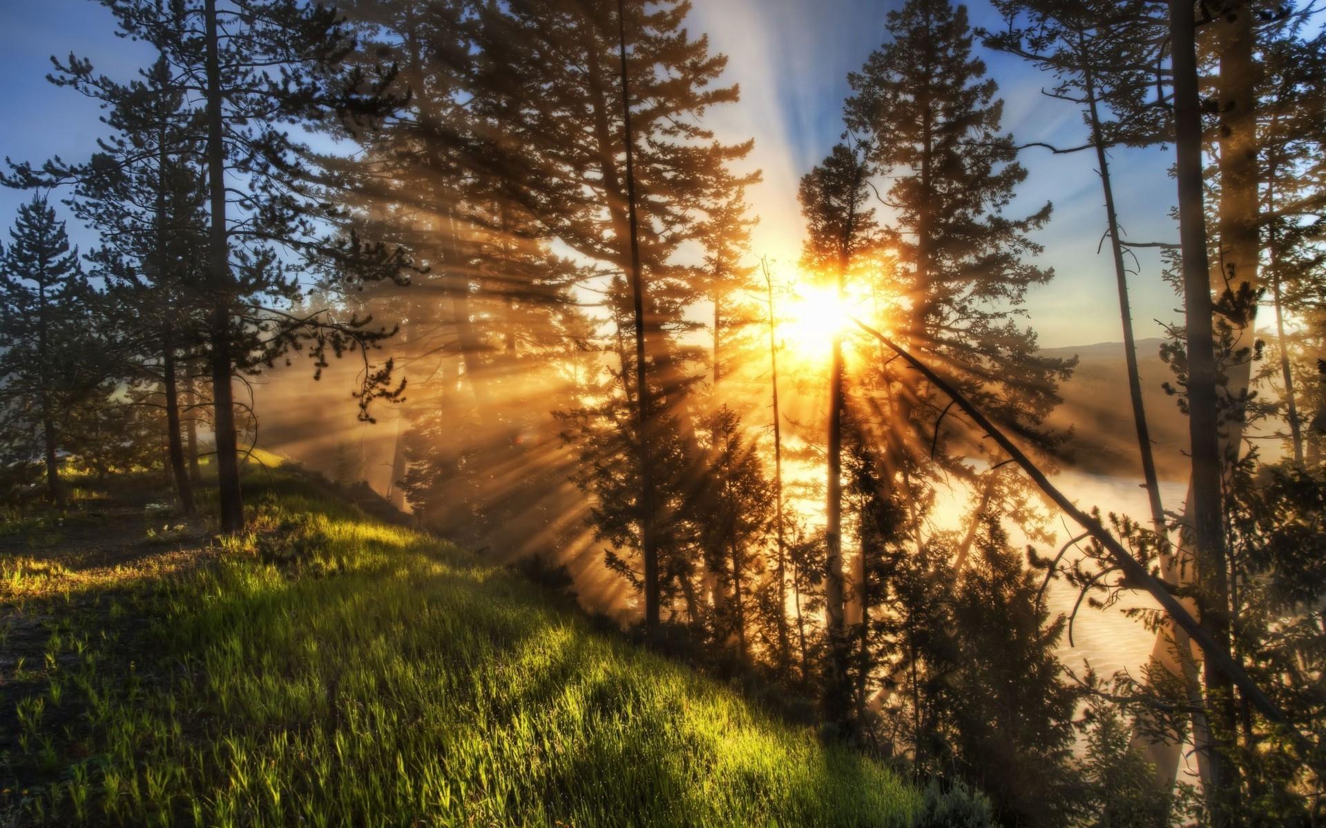 лучи солнца сквозь деревья скачать