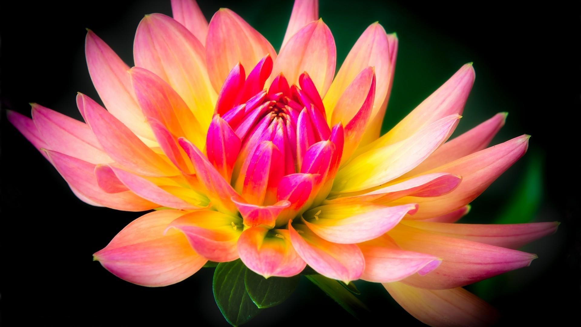 видео как вырастает цветок