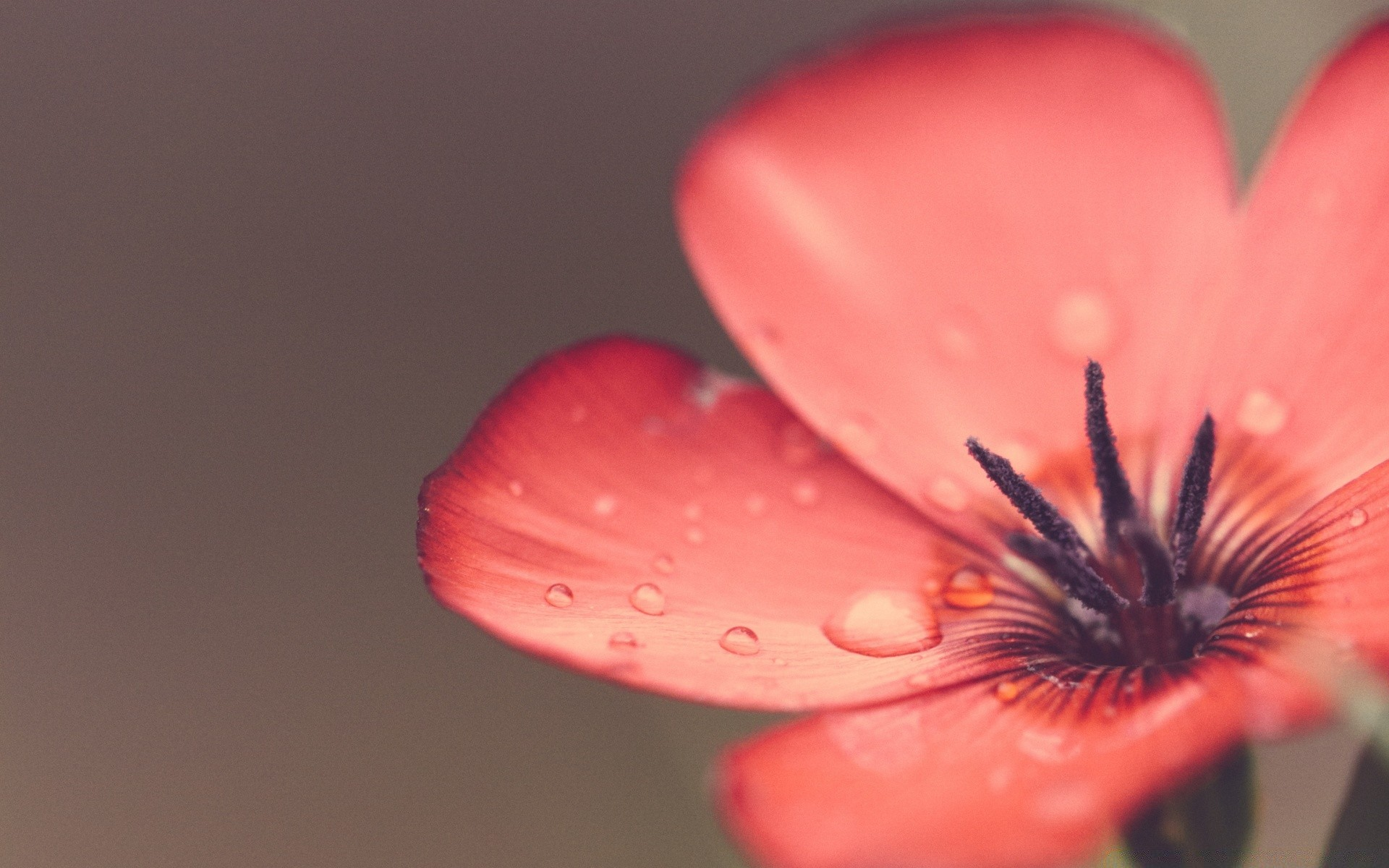 Обои цветок. Макро foto 11