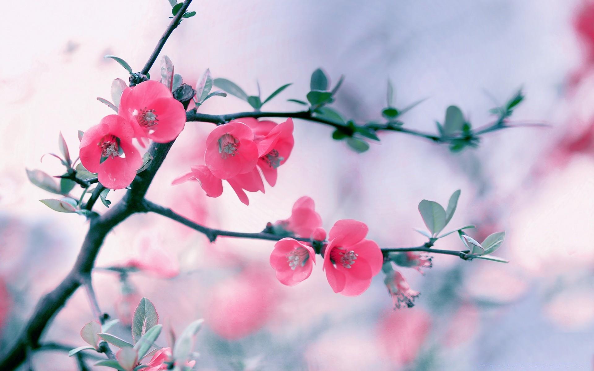 Картинки красивая весна на рабочий стол, смешные картинки про