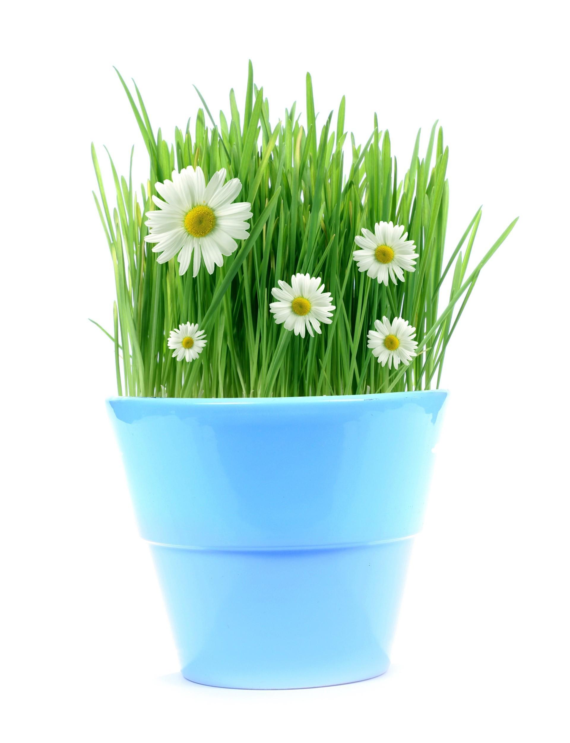 Картинки цветы в горшках на прозрачном фоне