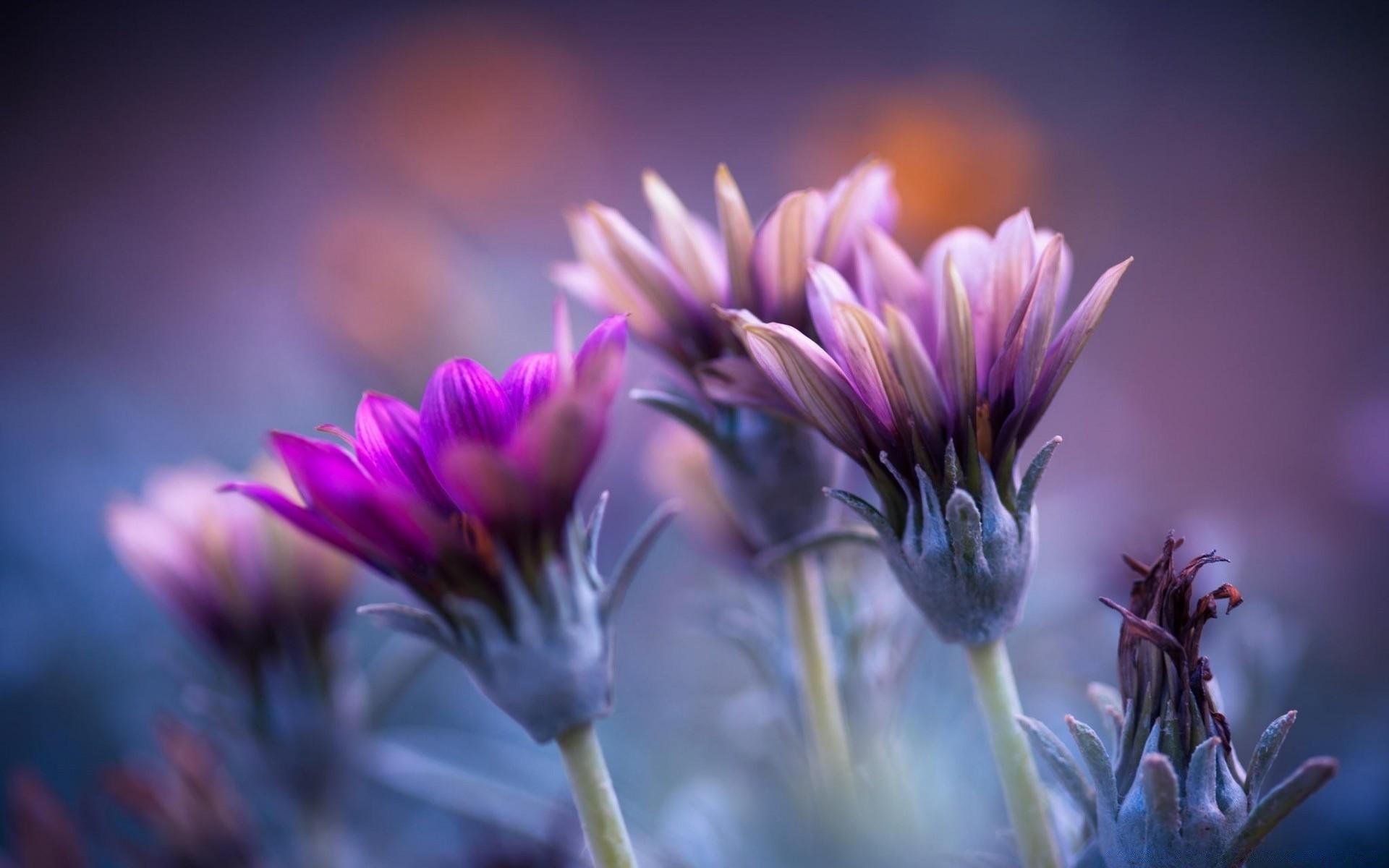 Обои размытый фон, цветок. Цветы foto 6