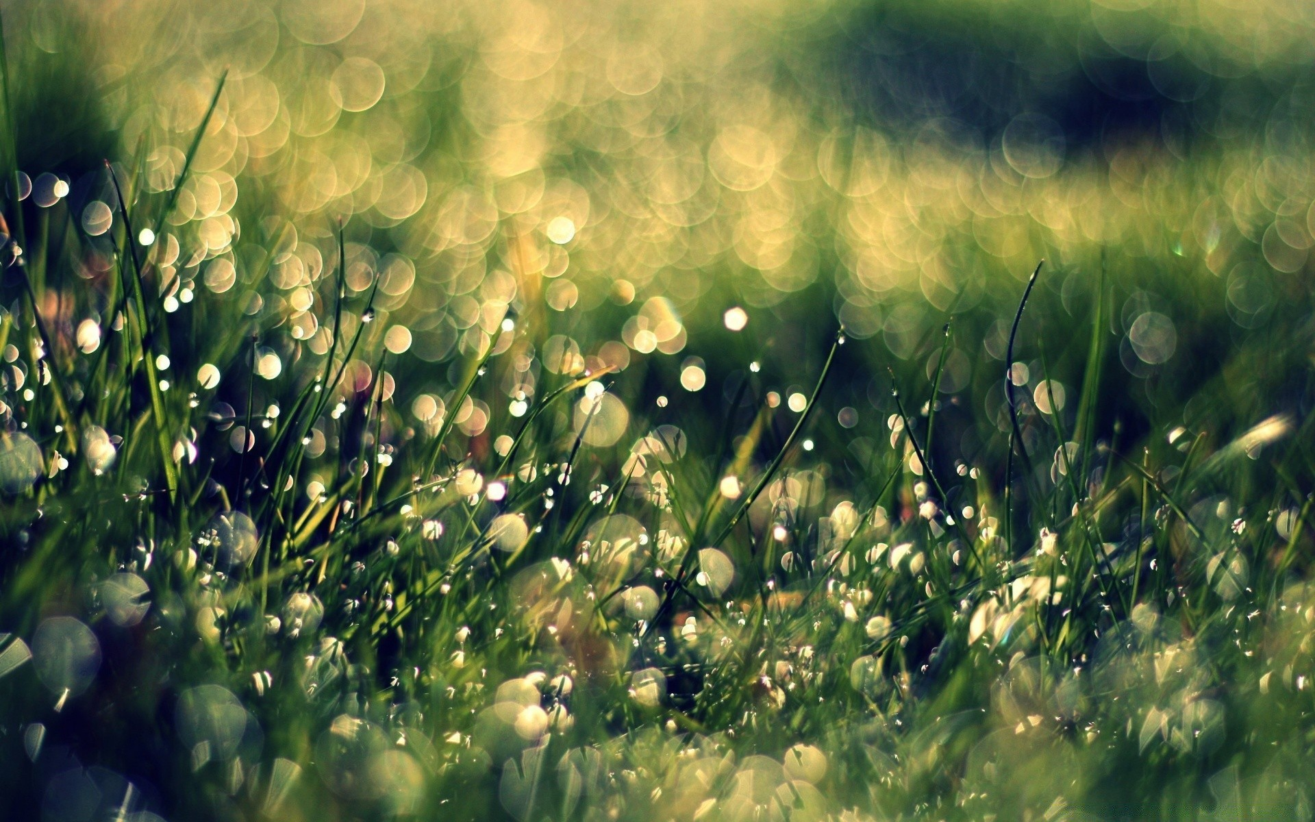 картинки лето природа роса преддверии