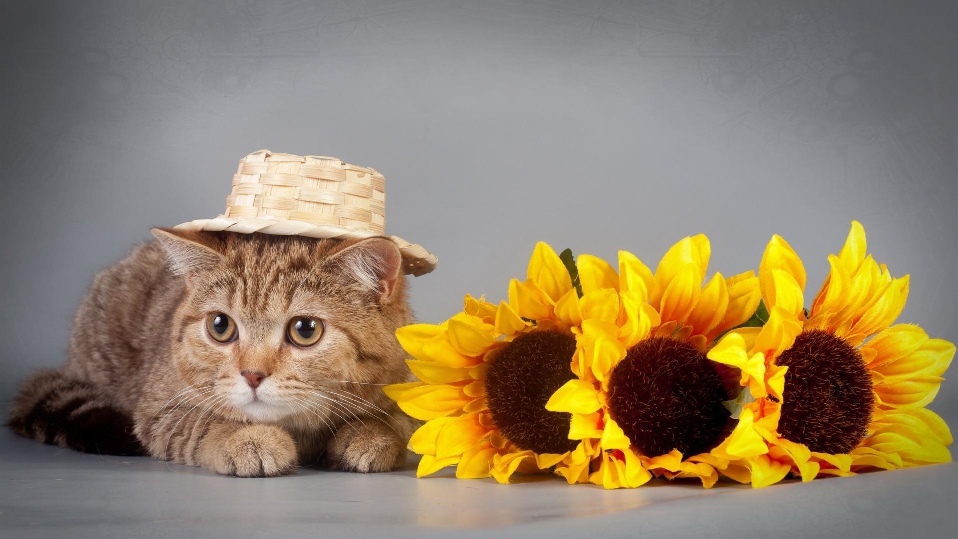 Картинки на обложку кошки
