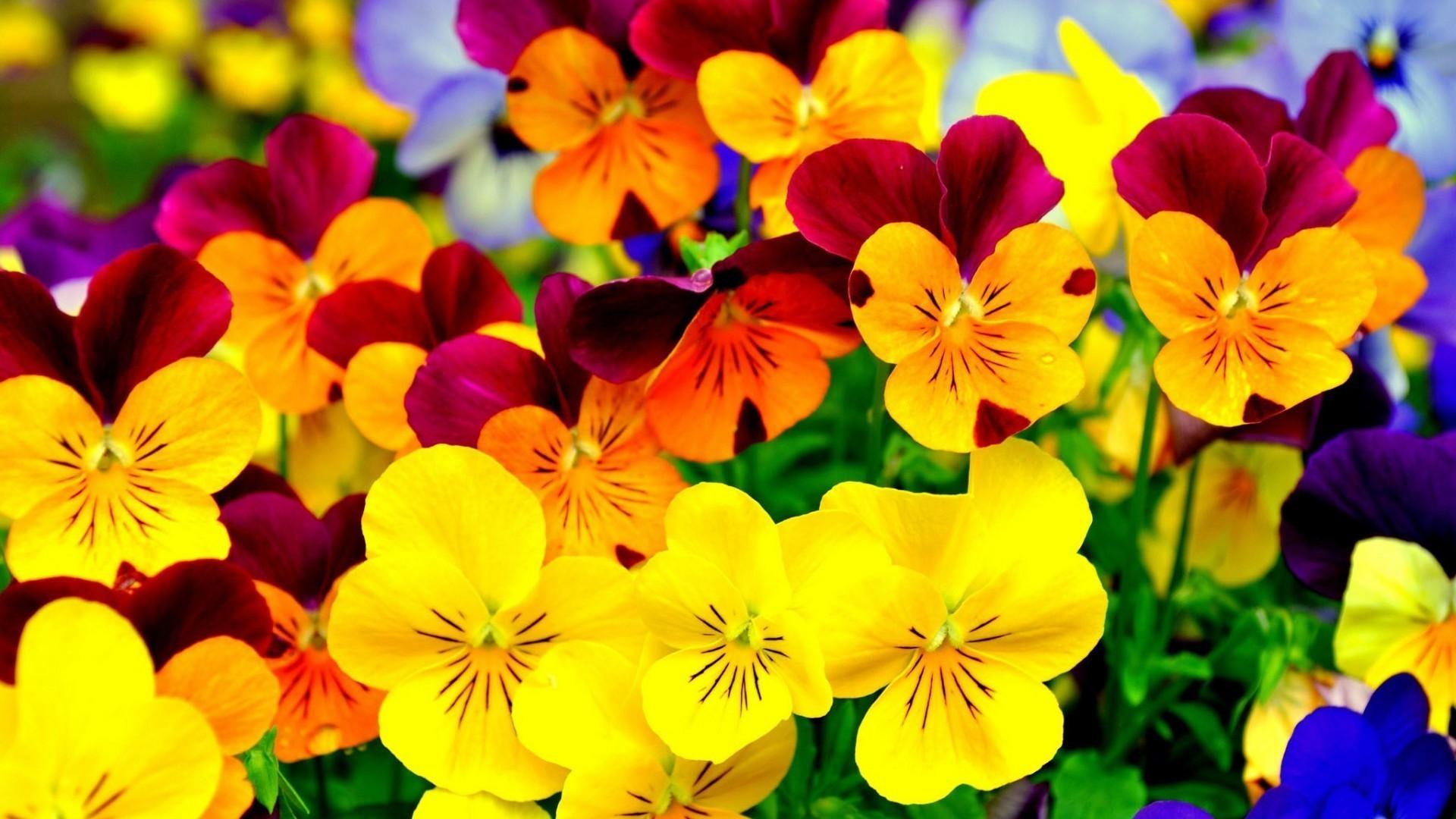 Очень яркие картинки цветов