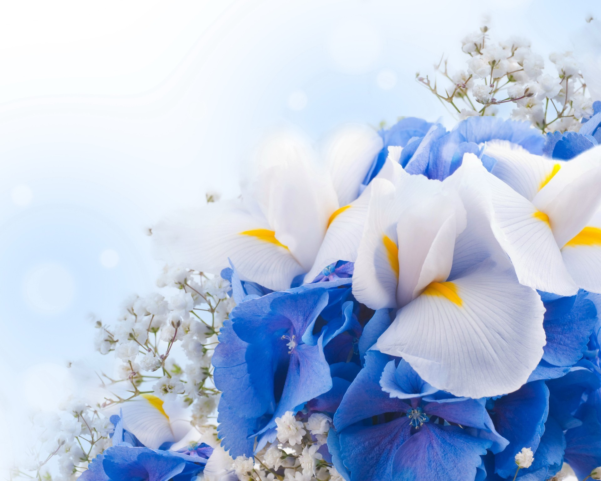 Белые и синие цветки загрузить