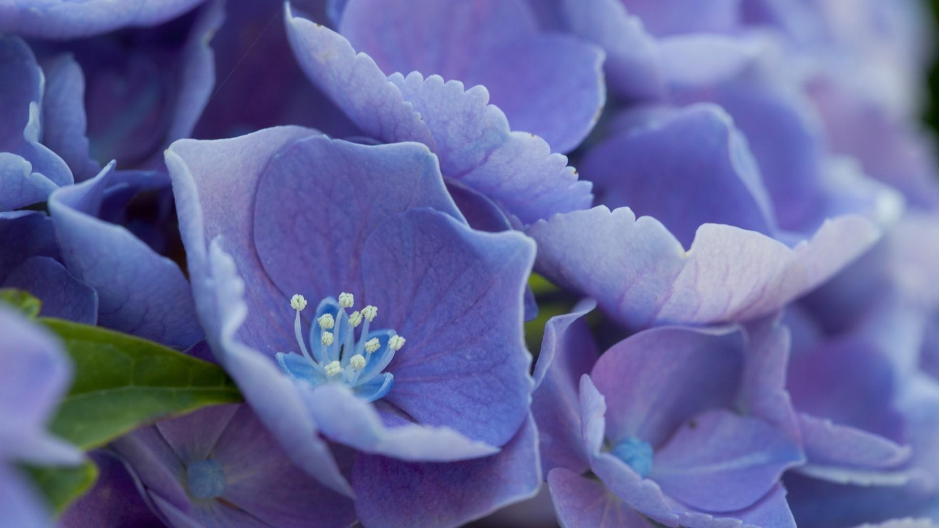 Мужчину открытки, картинки цветы голубые