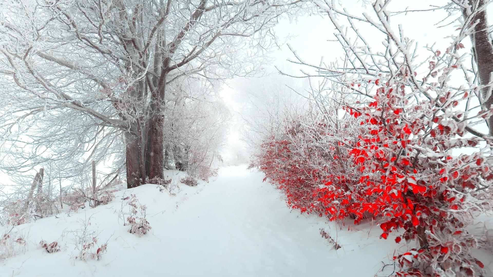осень первый снег обои рабочего стола № 637037 загрузить