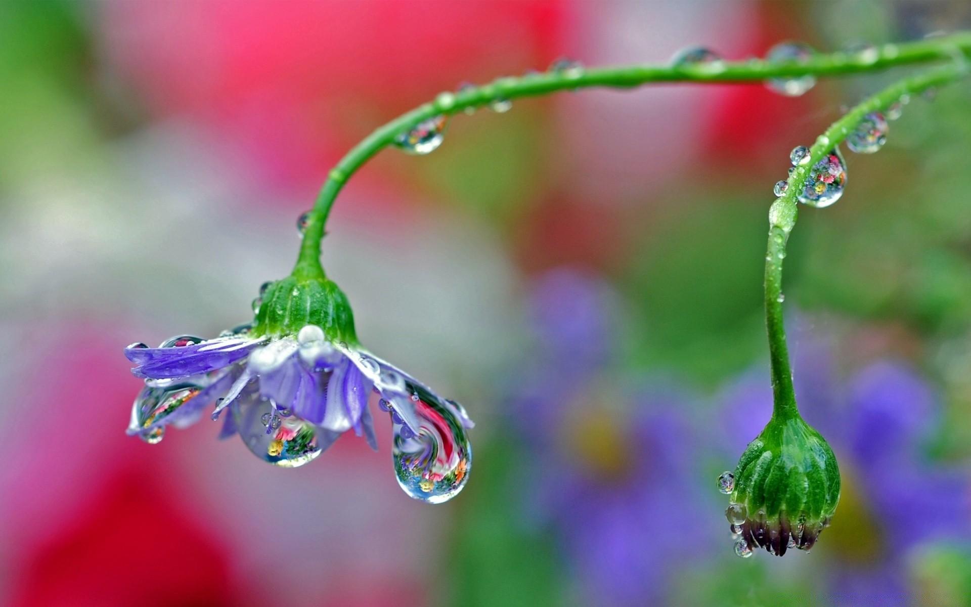 Фото капли воды высокого разрешения на цветах