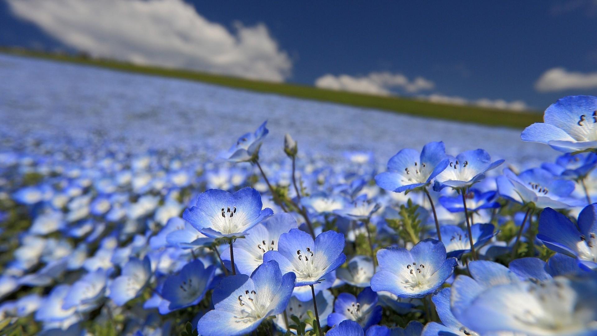 Скачать заставку цветы на андроид бесплатно