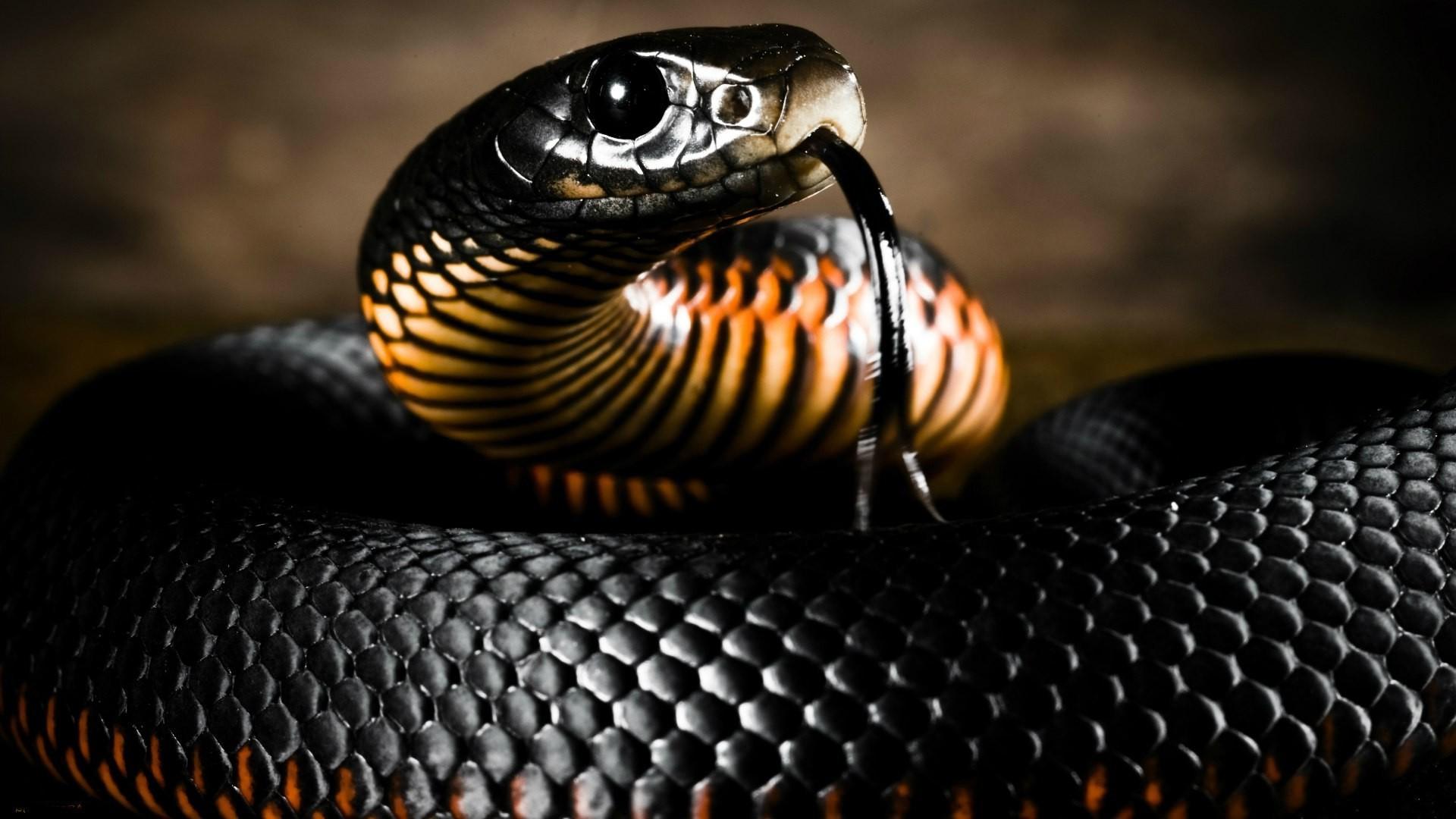 неё про мамба змея всё чёрная