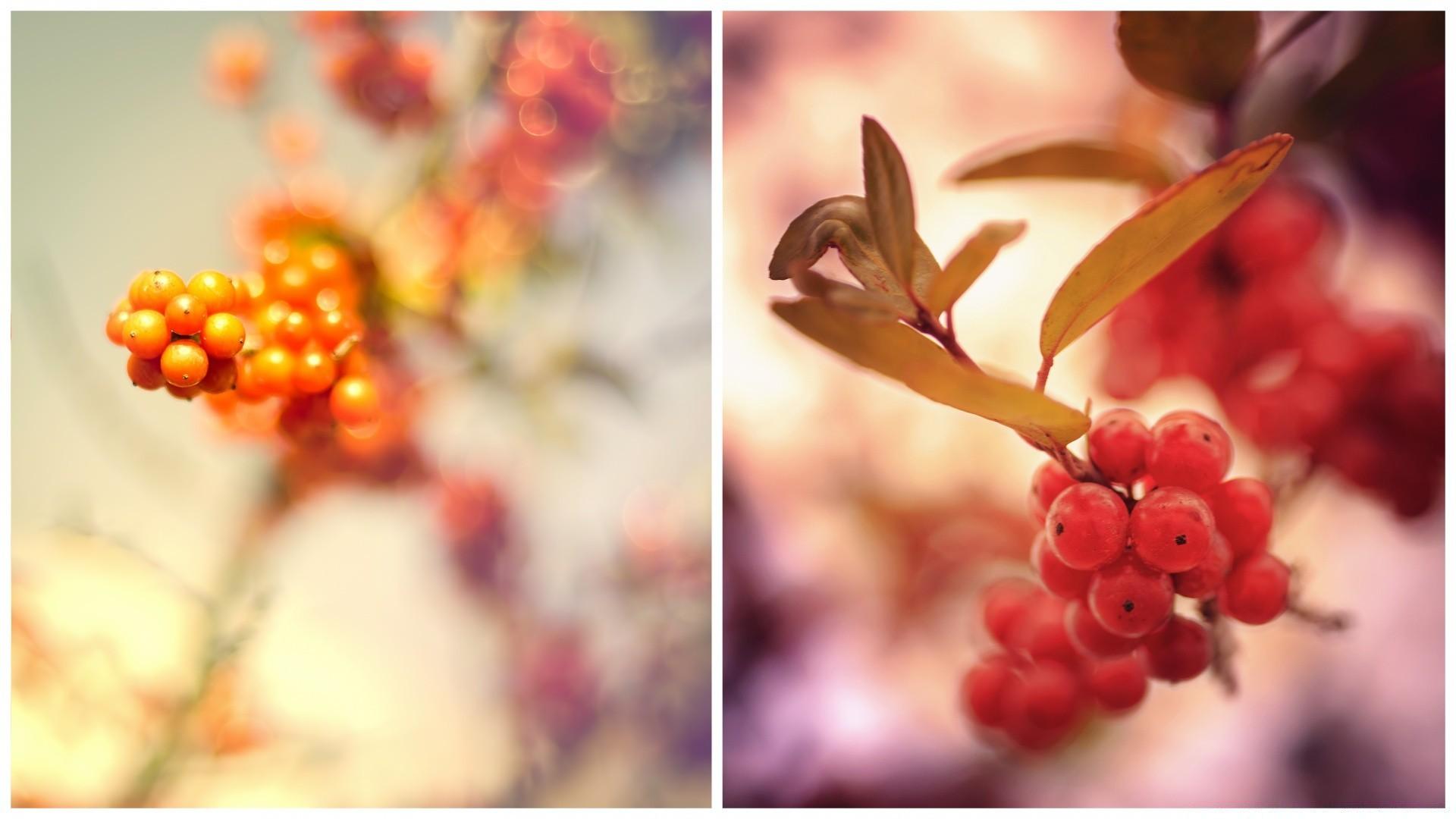 красные ягоды макро листья ветка онлайн