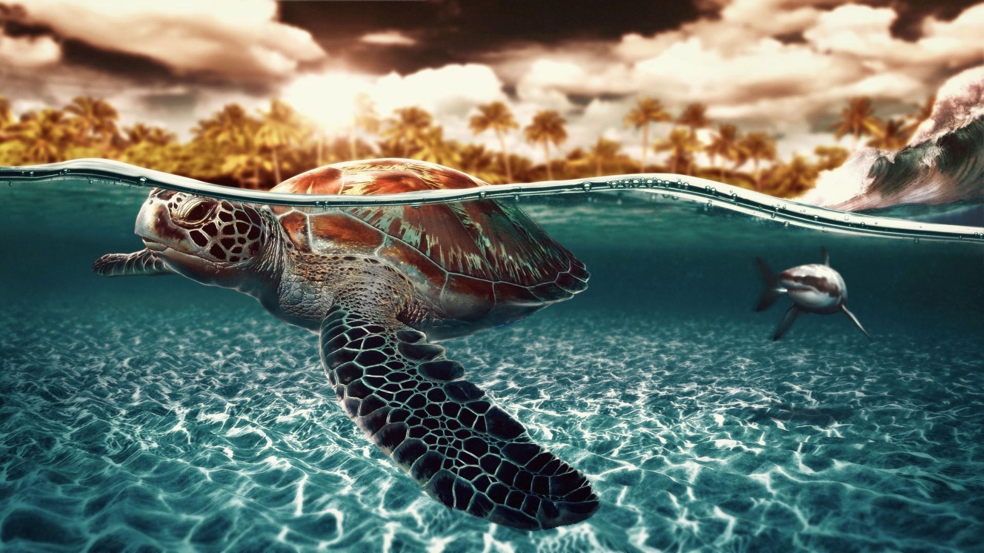 черепаха планета картинка на рабочий стол