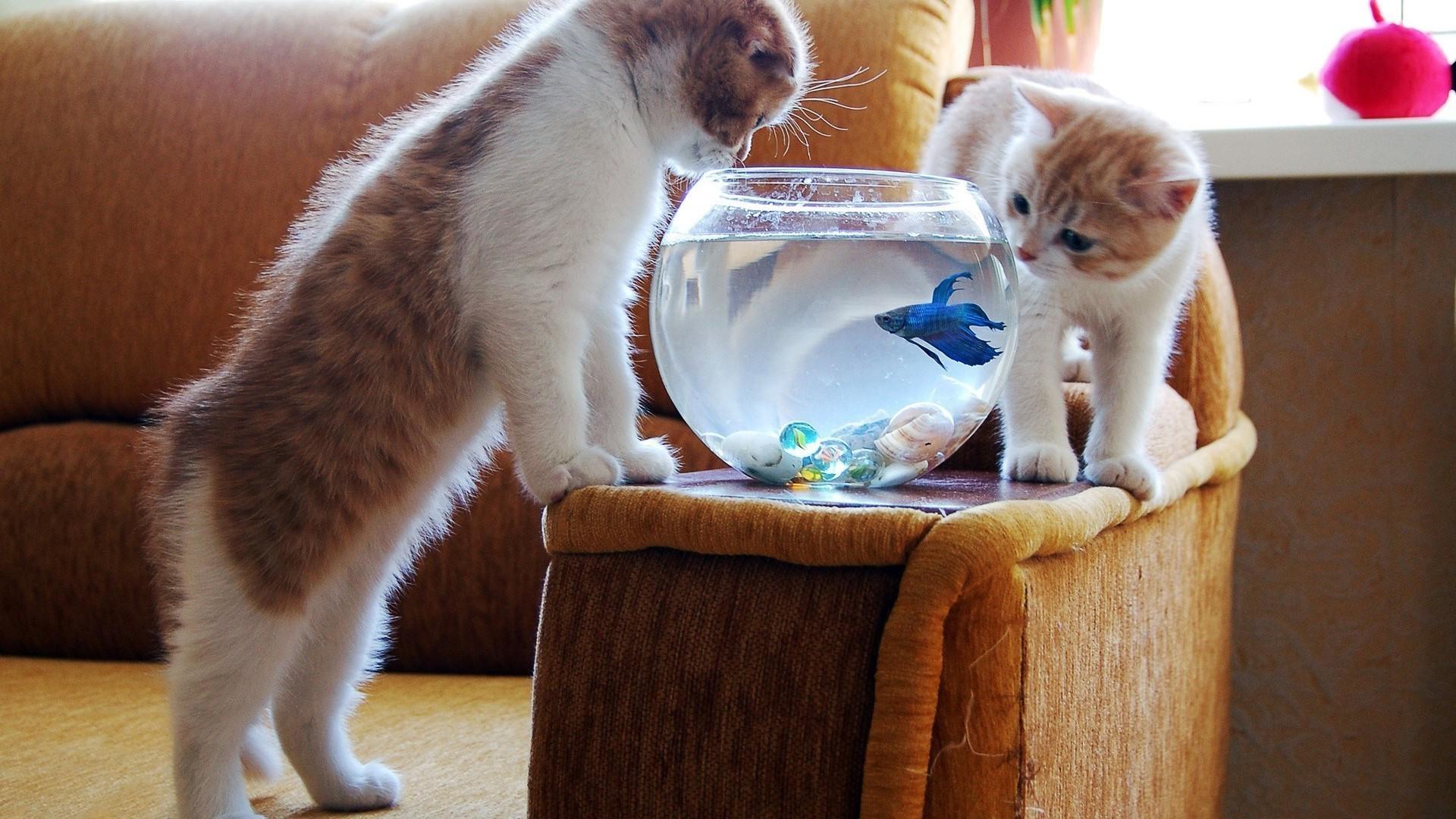 серый кот с рыбкой  № 692265 без смс