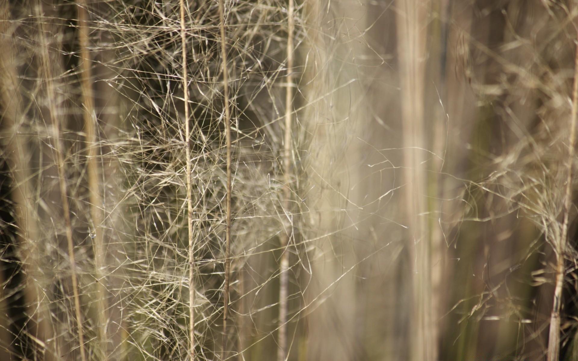 Тонкая трава загрузить