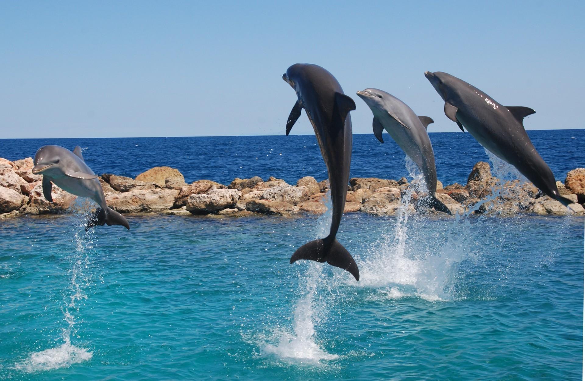 Поздравлением ребенка, картинки с морем и дельфинами