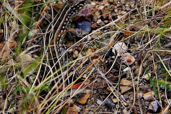 Рептилии лягушки